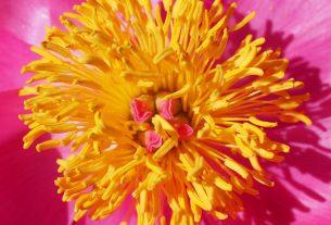 Blumen Blüher Liste Galerien Fotos