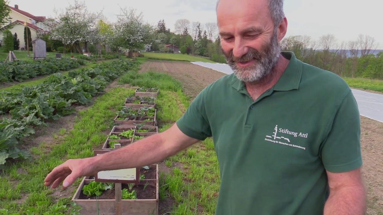 Garten-Tipps zum Thema Mischkulturen im heimischen Hochbeet