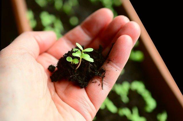 Beitragsbild Anbauen, Anpflanzen Säen im Juli und August Foto
