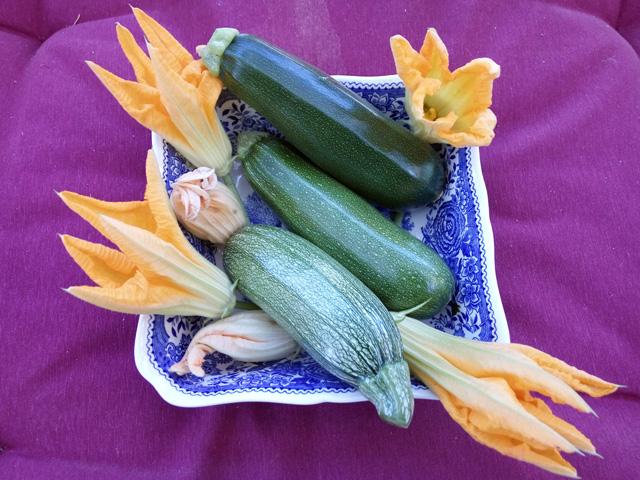 Zucchini Blüten Rezepte Anleitungen & Tipps Rezept Links